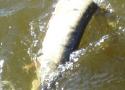 snoekvissen2008-03-06_09-51-02